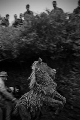 Campo do oso, Bestas (Galicia, 2007) Fotografía © Eutropio Rodríguez